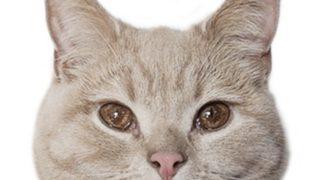 tomoと猫のチロルさんの年齢や本名などのwiki風プロフ!素顔画像はある?仕事は何?